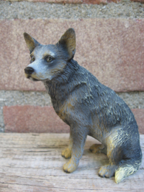 beedje Australian Cattledog blauw
