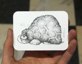ACEO - 6,5 x 9 cm
