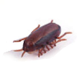 Kakkerlak op batterij (2550GF)