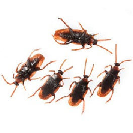Kakkerlakken - 5 stuks  (2500GF)