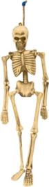 Hangend skelet - 40 cm (23613F)