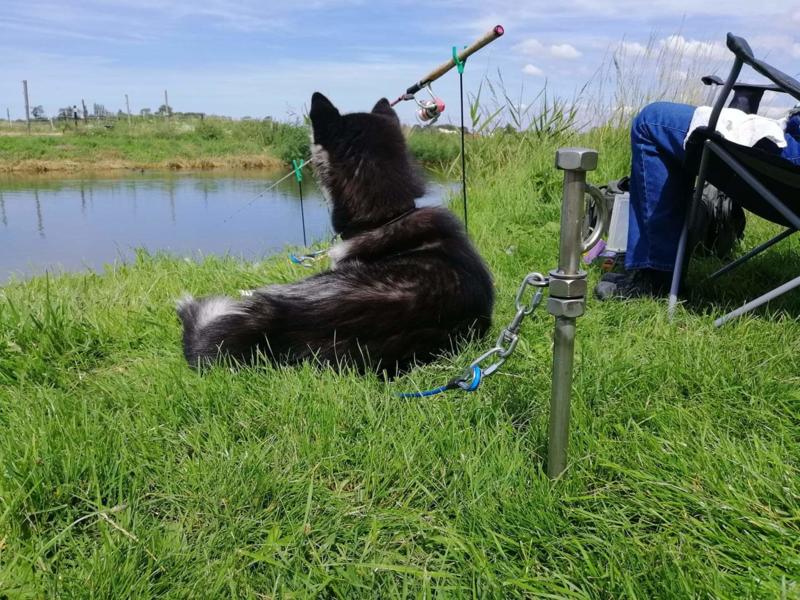 Stake-out 1 hond ( pen met kabel) met draaioog ( Camping pen)