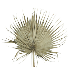 madam stoltz - palm blad