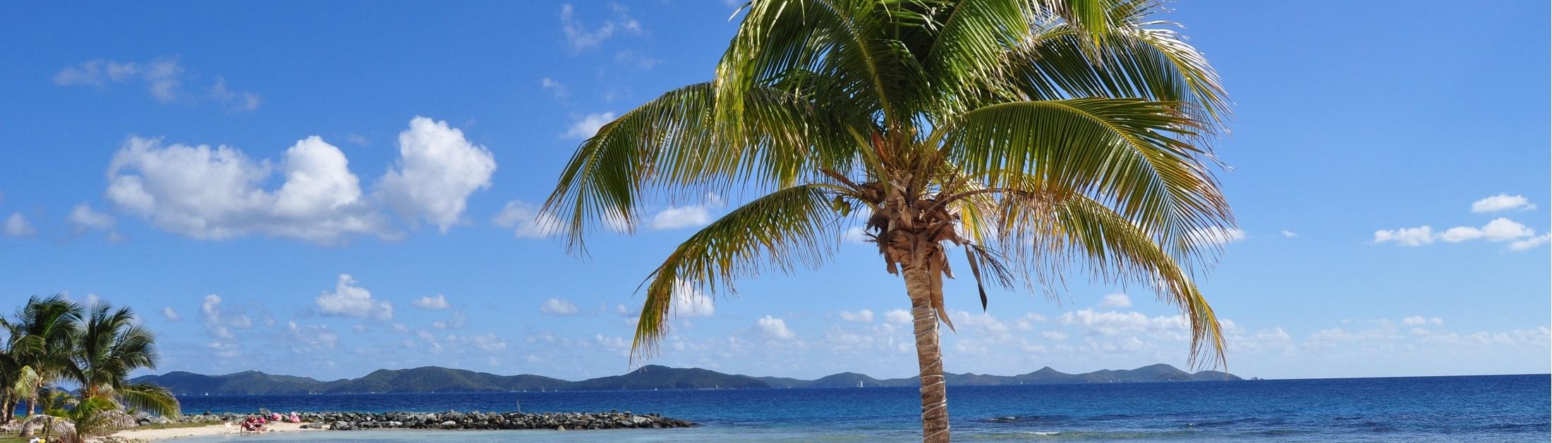 Palmtree Bahama