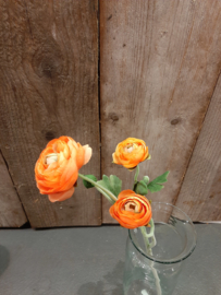 Ranokel oranje