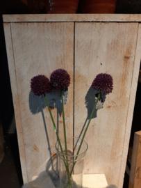 Alliumbollen paars