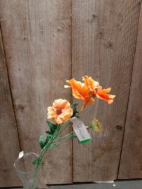 Japanse ranonkel oranje