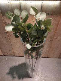 Eucalyptus grof groen