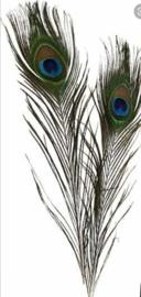 Gekleurde pauwenveer