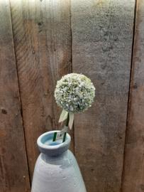 Alliumbollen wit (groot)