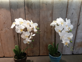 Zijde orchideeën plant wit (2taks)