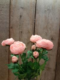 Ranokels roze