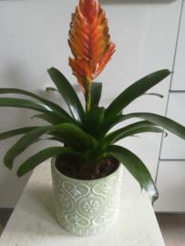Motief pot groen ○13 cm