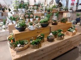 Verschillende planten bakjes