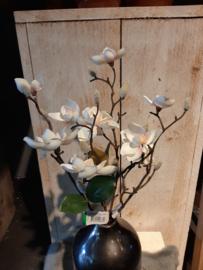 Magnolia wit kleinbloemig