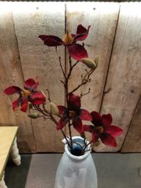 Magnolia donker rood