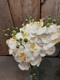 Orchideeën (Zijde)