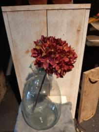 Hortensia warm rood