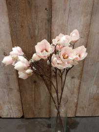 Magnolia zacht roze