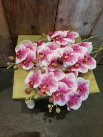 Orchideeën (Zijde) Roze