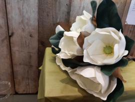 Grote magnolia bloem