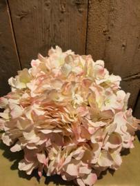 Hortensia bol roze