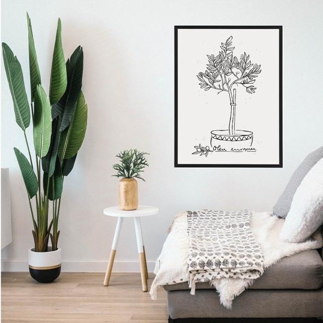 Poster Olijfboom met lijst