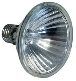 Par 30 bulbs