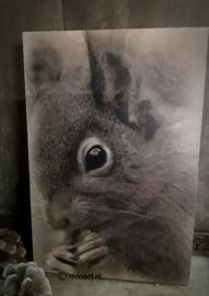 Mini paneel eekhoorn
