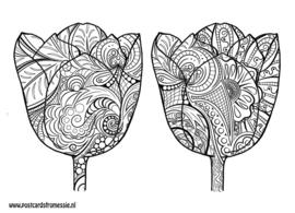 Kleuransichtkaart Tulpen