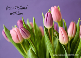 From Holland with love - Tulpen