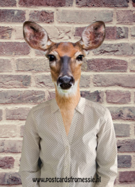 Deer with blouse