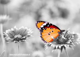 Vlinder ansichtkaart