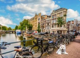 Max in Amsterdam