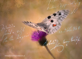 Bloemen - Vlinder op distel