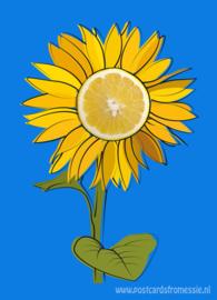 Lemon sunflower