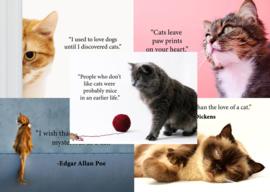 Kaartenset Katten quotes