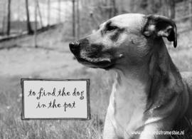 Hond ansichtkaart