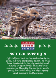 Famous Dutch Animals - Wild Zwijn