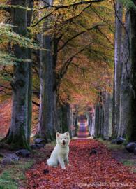 Max in de herfst