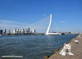 Max in Rotterdam