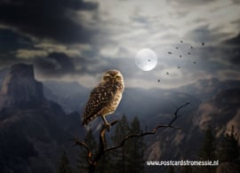 Owl in the moonlight