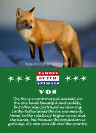 Famous Dutch Animals - Vos