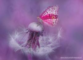 Vlinderdroom