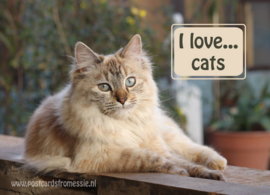 I love...cats ansichtkaart
