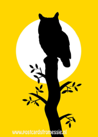 Silhouette owl