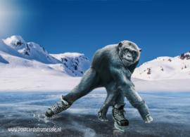 Skating monkey