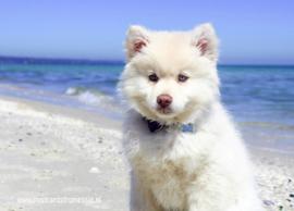 Hond op strand ansichtkaart