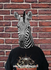 Zebra with t-shirt