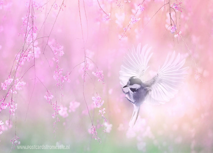 Bird dream
